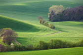 Photo Abstract landscape of Sunny hills with green fields and blossom