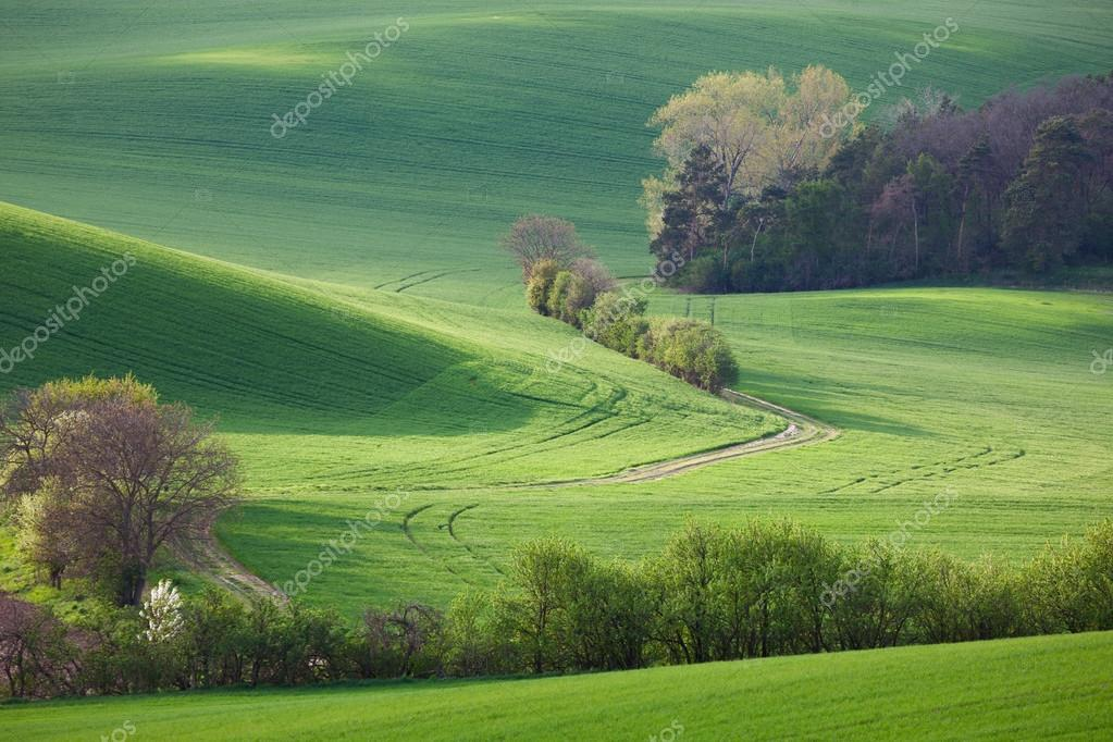 Abstract landscape of Sunny hills with green fields and blossom