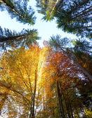 Fotografie Podzimní listí a stromy s sluneční paprsky - krásná sesonal backg