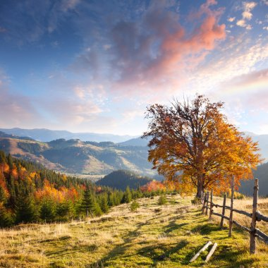 Autumn Landscape with Big Yellow Tree and Mountain Panorama