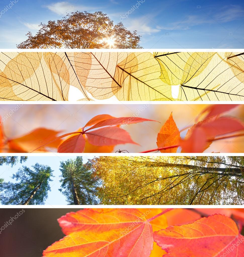 Set of Different Fall Banners - colorful autumn abstract  backgr