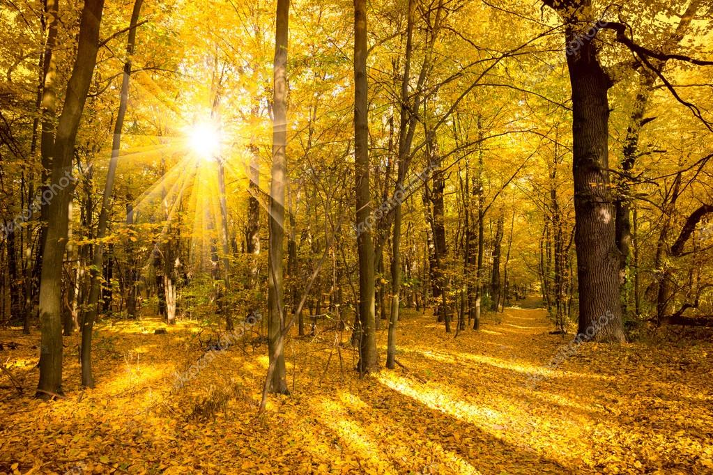 Gold Autumn landscape with sunlight and sunbeams