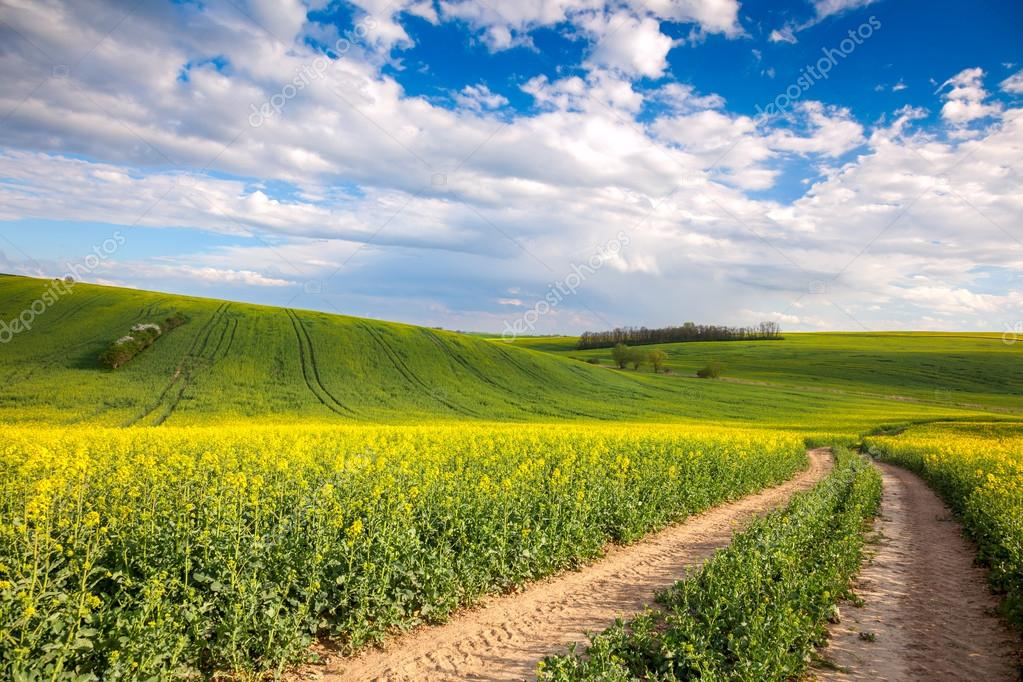 Colorful Valle - Yellow flowering fields and ground road overloo