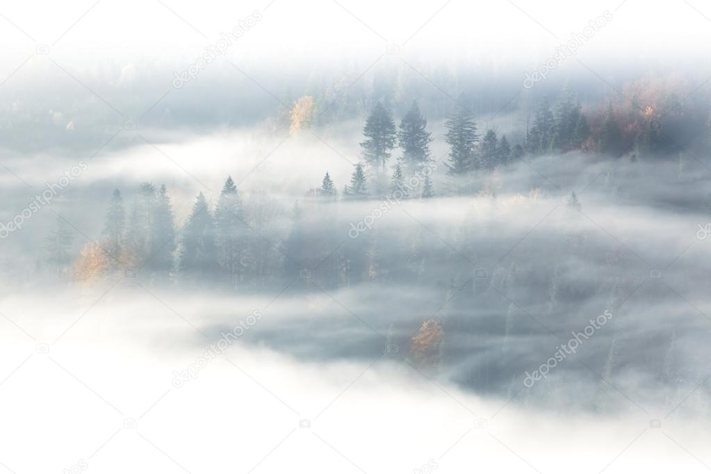 Autumn season, wild forest  in sunrise fog and clouds