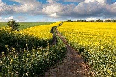 Ground Road in Flowering Field, beautiful countryside