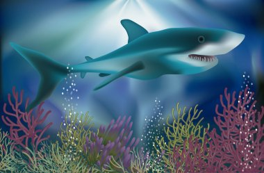 Underwater wallpaper with white Shark, vector