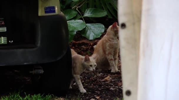 dvě kočky