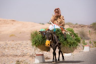 Woman farmer sitting and traveling on her donkey, Morocco