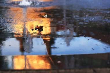 Water on asphalt with autumn leaf
