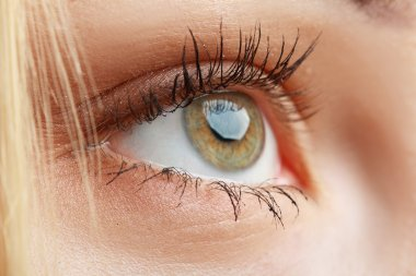 Macro eye closeup