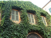 Photo old house entwined with climbing plants