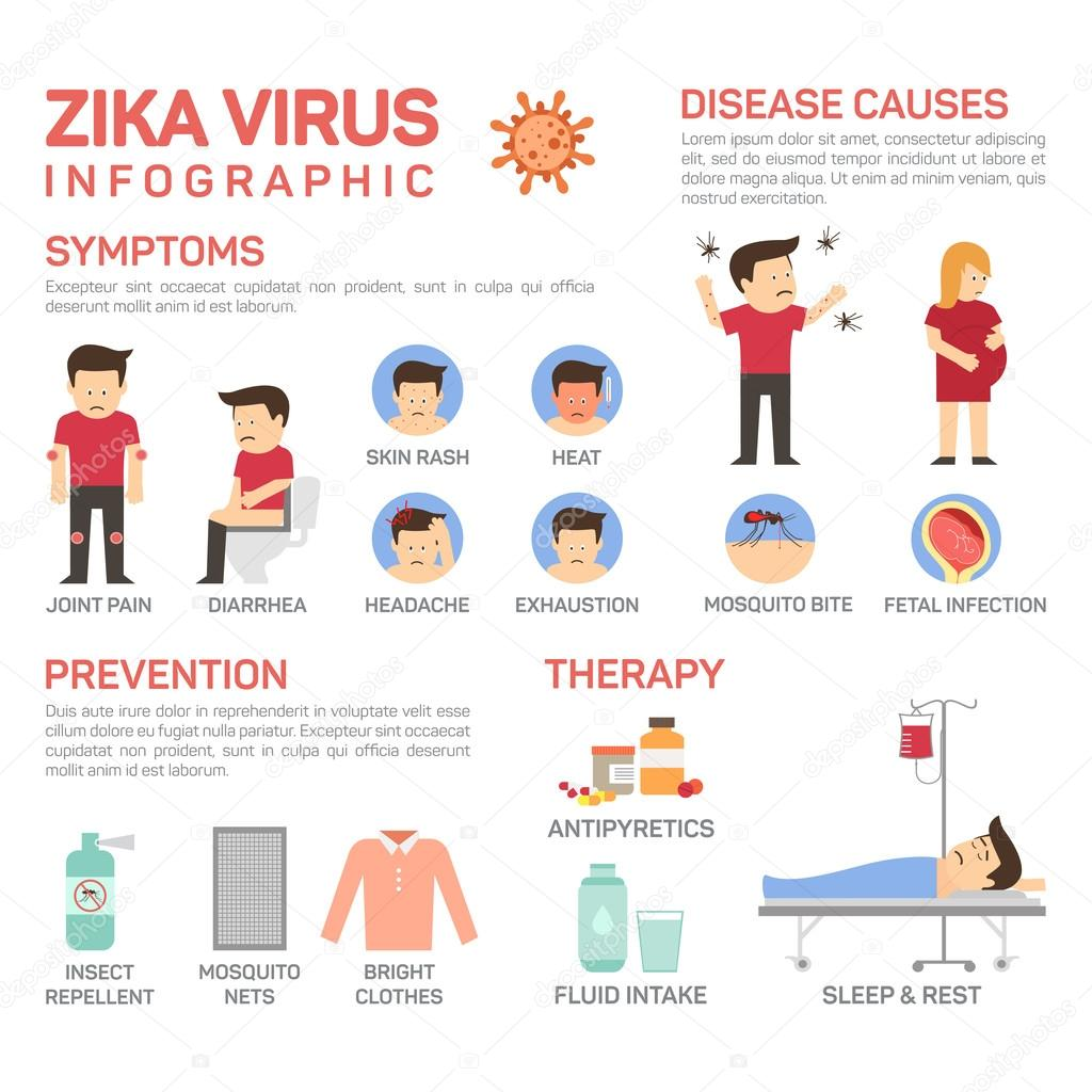 vector flat illustration of zika virus infographics  prevention of desease causes like mosquito