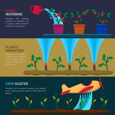 Automatic Sprinklers Watering. Agriculture