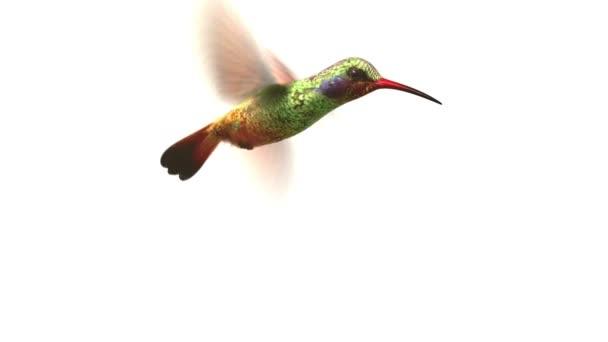 Repülő kolibri