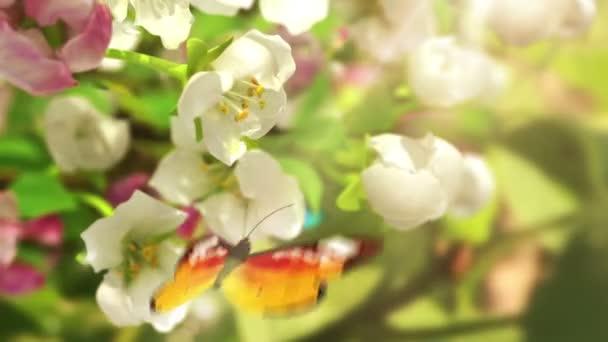 Blühende Blumen und Schmetterlinge