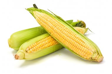 Sweet corn cob with green leaves