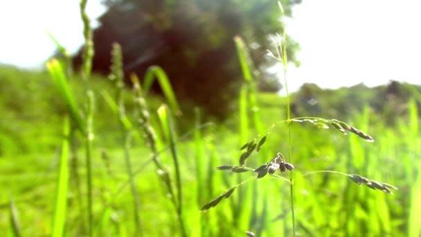 Muž, neudržuje trávník, zavřete na trávě v popředí - zkratka - Full Hd