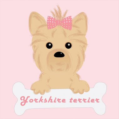 Cute puppy of yorkshire terrier