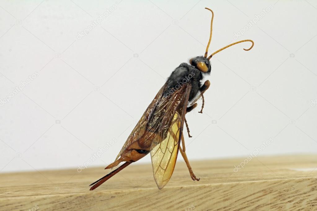 insecte bois photographie worldnews 77678460. Black Bedroom Furniture Sets. Home Design Ideas
