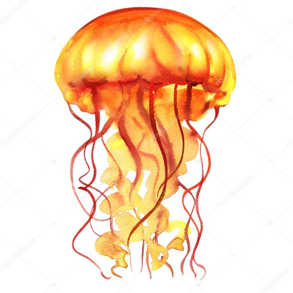 Extremamente Laranja oceano água água-viva, medusa, isolado, vida marinha  MR37