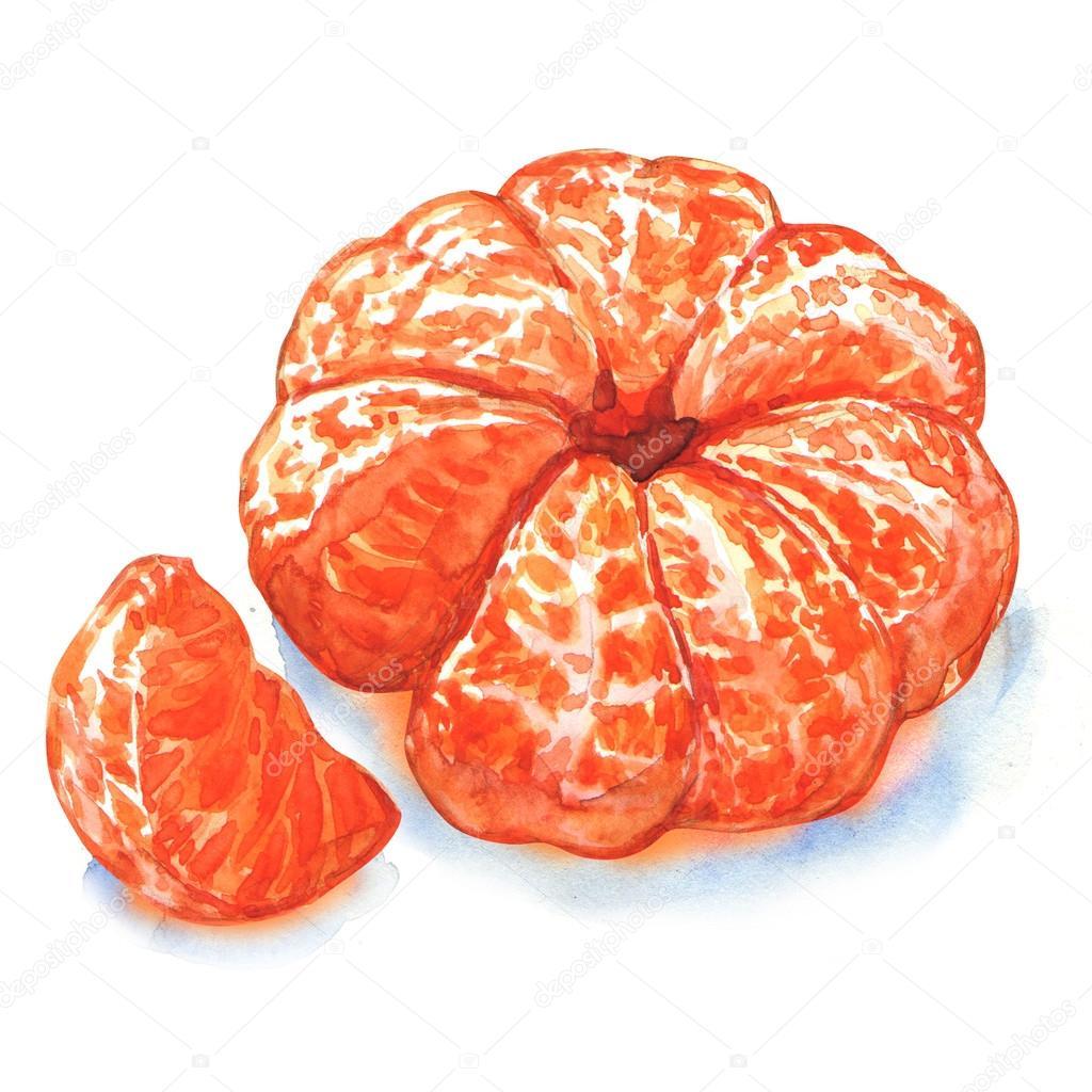 Gepelde Mandarijn Of Mandarin Fruit Geïsoleerd Stockfoto Deslns