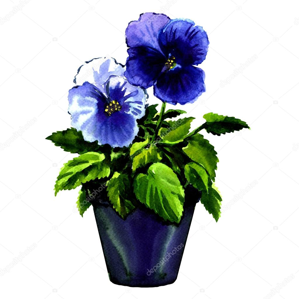 beautiful violet flowers in pot isolated