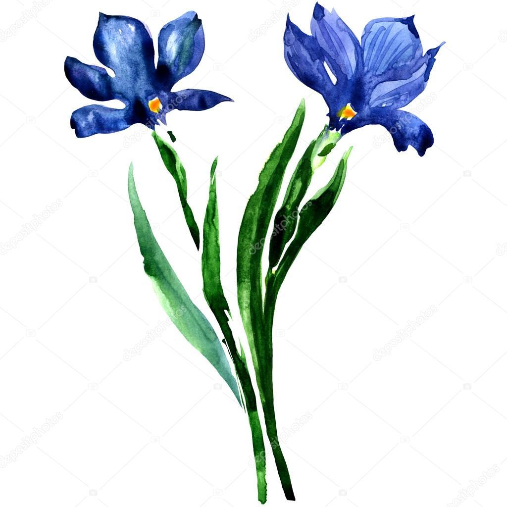Blue flowers. Watercolor floral illustration.