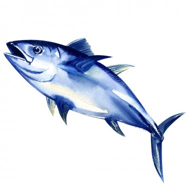Bluefin tuna fresh isolated on white