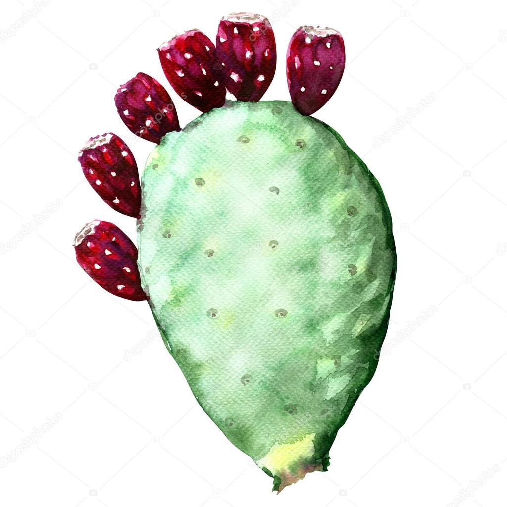 Opuntia ficus indica cactus with fruit