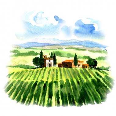 Rural landscape with fields vineyard and country house, watercolor painting on white background stock vector