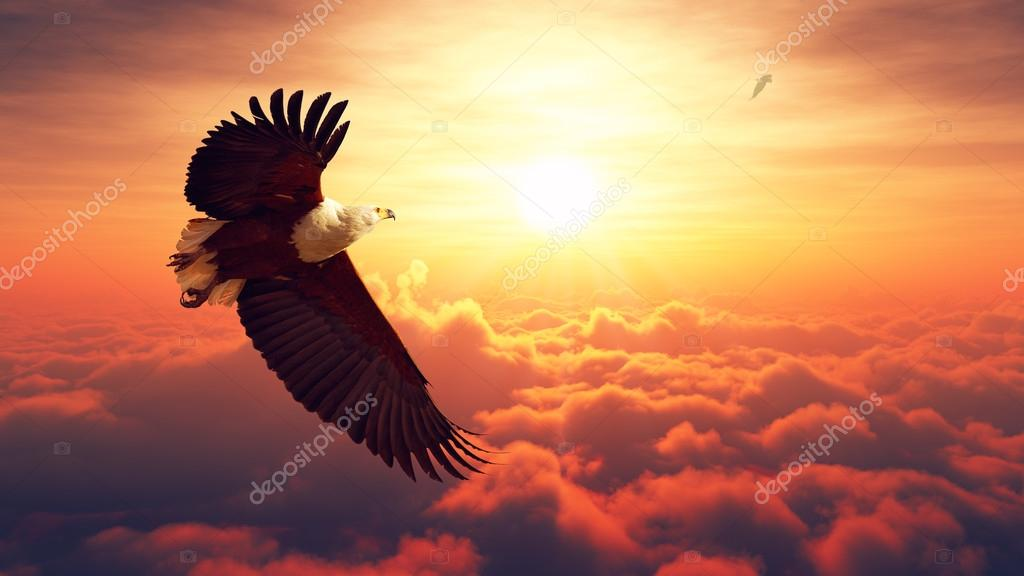 Fish Eagle flying above clouds