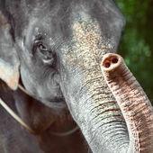Fotografie Jediný slon