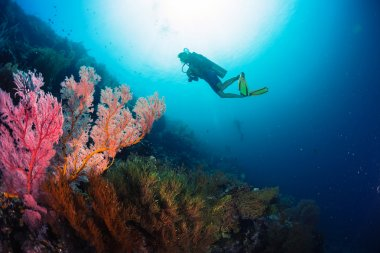 Divers exploring the bright coral reef
