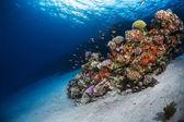 Sea floor and vivid coral reef