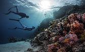 Zwei Freitaucher schwimmen unter Wasser