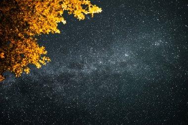 Starry sky with Milky Way