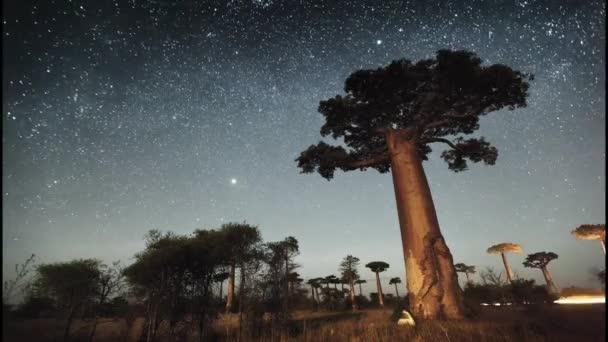 Hvězdnou oblohu a baobab stromy
