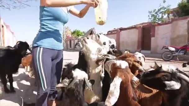 Lady krmení stádo koz