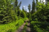 Erdő, fák