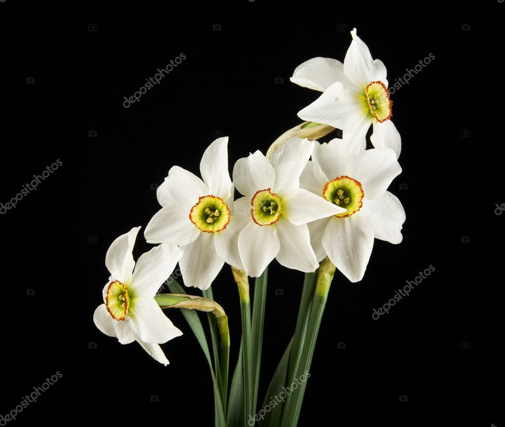 Spring flowers daffodils stock photo valzan 115733182 spring flowers daffodils stock photo mightylinksfo