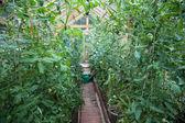 Fotografie zeleninové skleníkových
