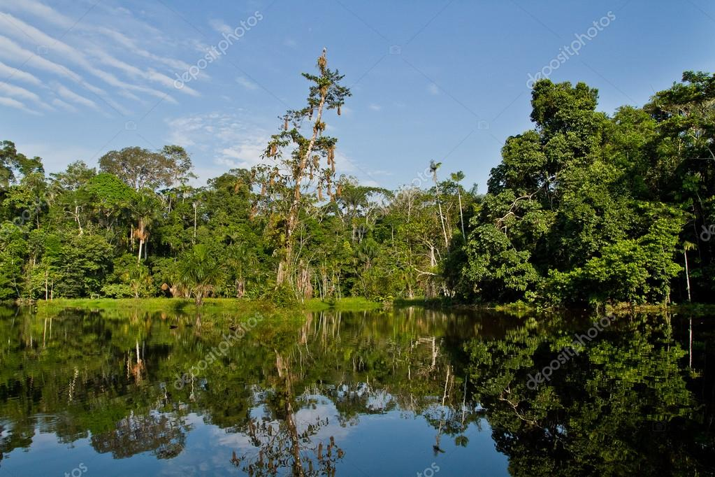 Beautiful landscape of the amazon rainforest, Yasuni National Park, Ecuador
