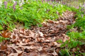 Cesta v trávě a květiny v lese zblízka