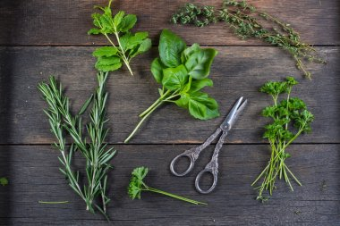 Fresh herbs preparation for drying on black background