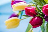 Čerstvý jarní banda tulipány