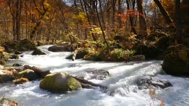 Tajemný Oirase proud protékající podzimní Les v Towada Hačimantai národního parku v Aomori, Japonsko
