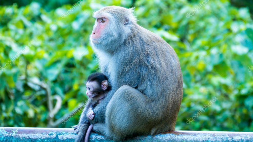 Mono Gracioso Graciosos Monos A Vive En Un Bosque Natural