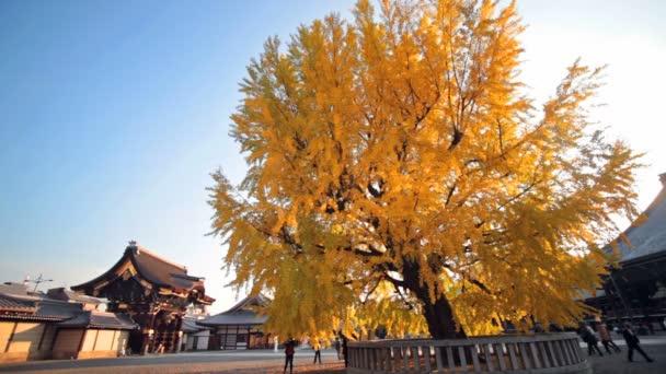 podzimní barvy v eikando chrámu, Kjóto, kansai, Japonsko