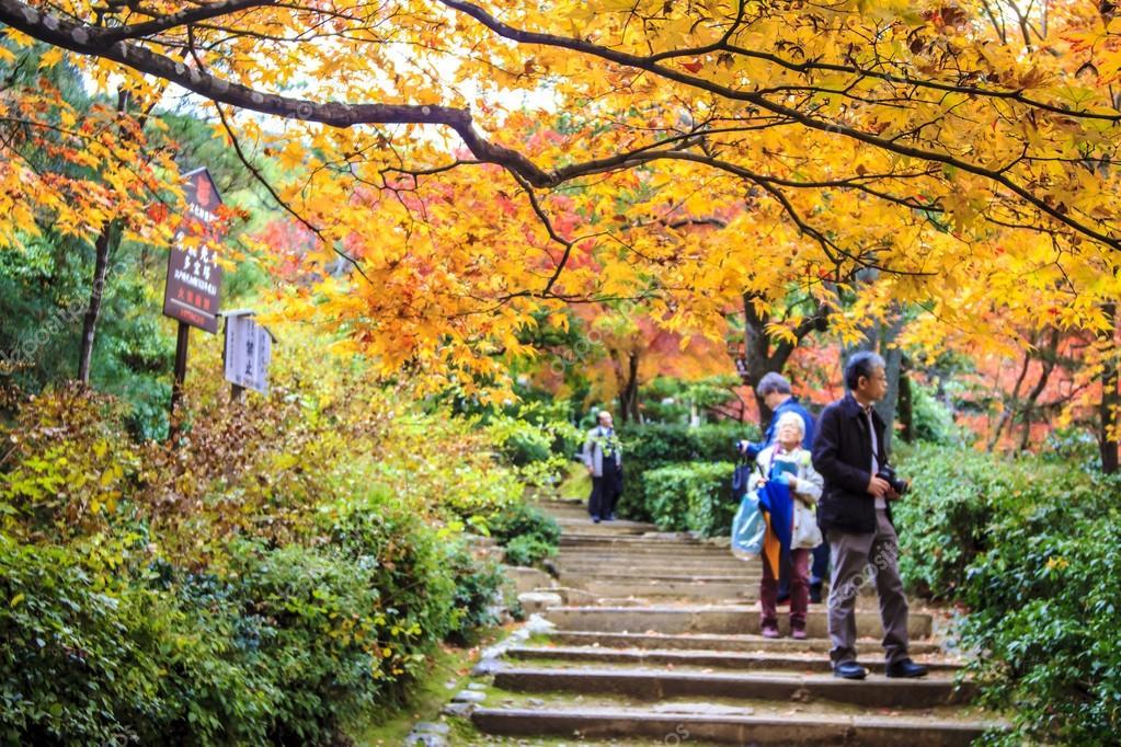 Rboles de arce rojo en un jard n japon s foto editorial for Arbol rojo jardin