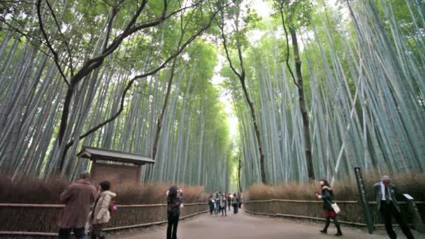 Grüner Bambus-Hain in arashiyama